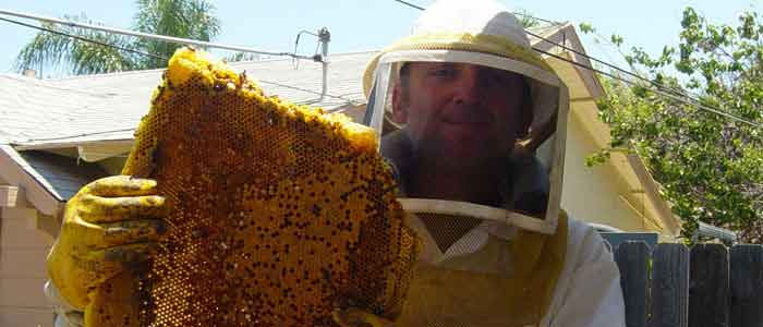 bee-removal-home-header-1