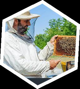 Bee Swarm Los Angeles