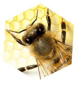 Bee Hive Removal Los Angeles